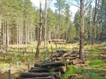Photograph of Dunnet Forestry Trust