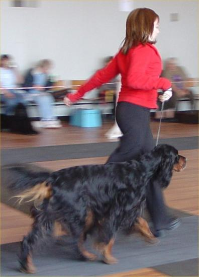 Photograph of Caithness Canine Club 2004 Dog Show At Wick