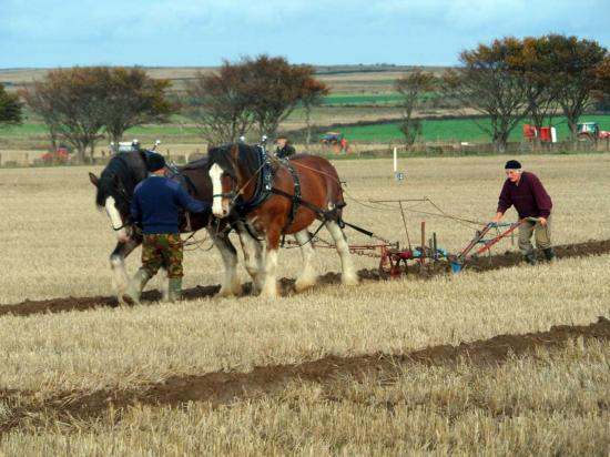 Photograph of 51st Scottish Ploughing Championships 2013
