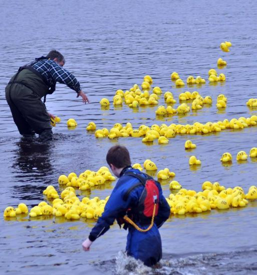 Photograph of Lifeboatmen keep duck race afloat in slow-moving river