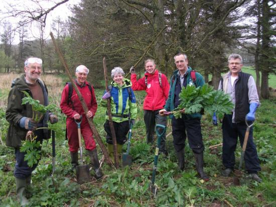 Photograph of Caithness Volunteers Get Giant Hogweed Under Control