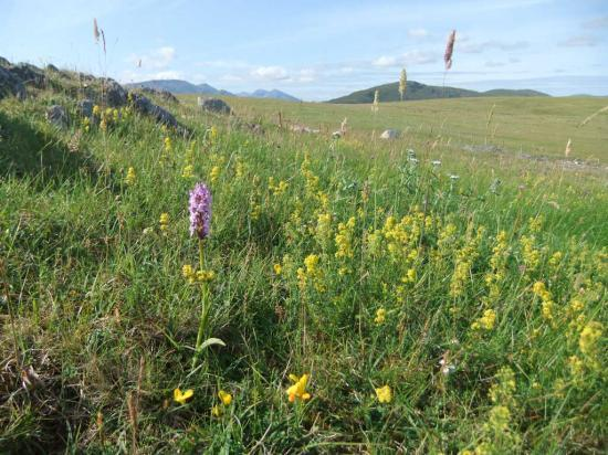 Photograph of Flower-rich grasslands - brilliant for bumblebees