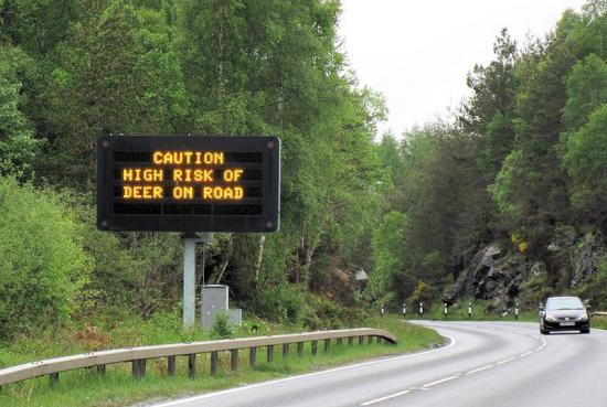 Photograph of Clock change increases deer risk on roads