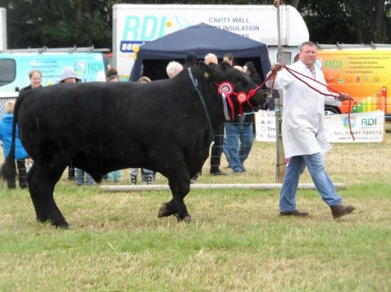 Photograph of Caithness County Show 2014