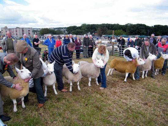 Photograph of Caithness County Show 2012