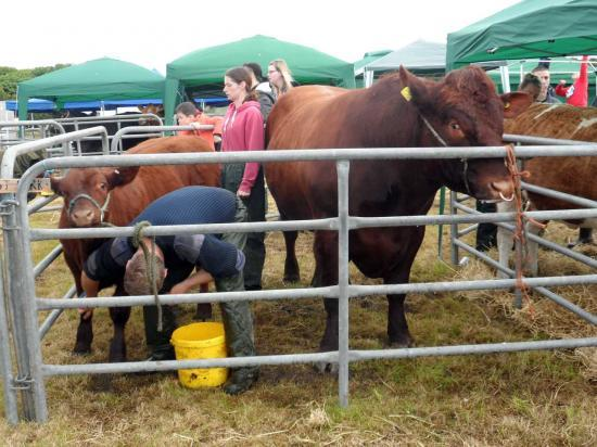 Photograph of Caithness County Show 2015 - Saturday Photos