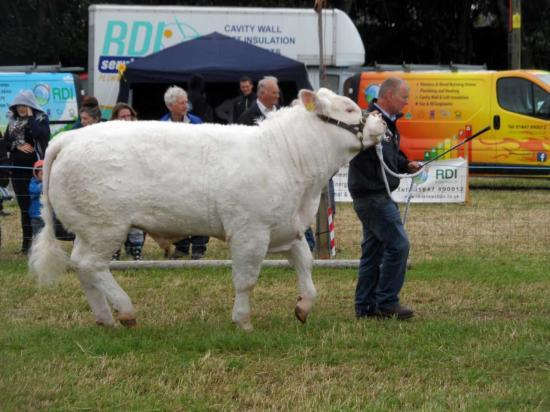 Photograph of Caithness County Show 2016 - Deadline For Entries