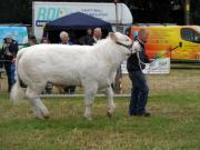 Thumbnail for article : Caithness County Show 2016 - Deadline For Entries