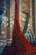 Thumbnail for article : Poppies: Weeping Window in Orkney