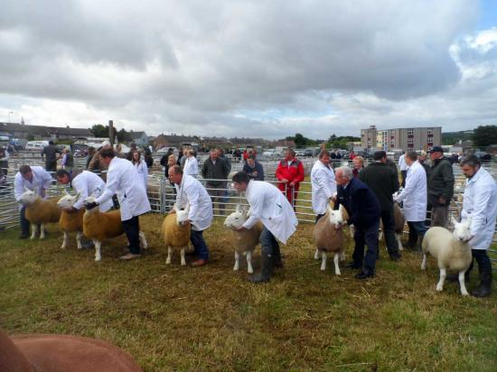 Photograph of Caithness County Show 2016
