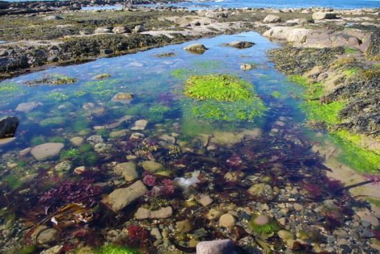 Photograph of Rockpool Rummage, Ackergillshore - 19th March 2017