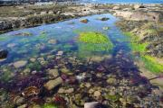 Thumbnail for article : Rockpool Rummage, Ackergillshore - 19th March 2017