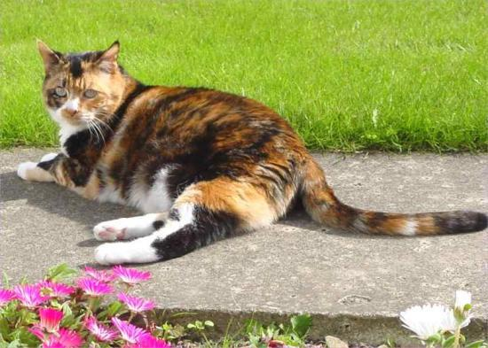Photograph of Create a feline-friendly planting scheme with Cats Protection's gardening tips