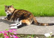 Thumbnail for article : Create a feline-friendly planting scheme with Cats Protection's gardening tips