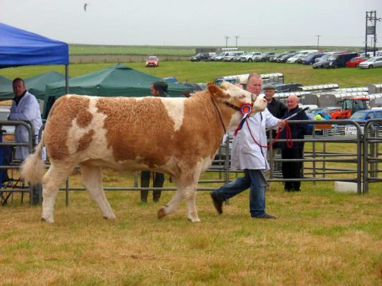 Photograph of Caithness County Show 2017 - Saturday