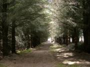 Thumbnail for article : Dunnet Forestry Trust Bids To Take Ownership Of The Forest
