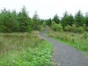 Thumbnail for article : Tree Planting At Newtonhill Woodland