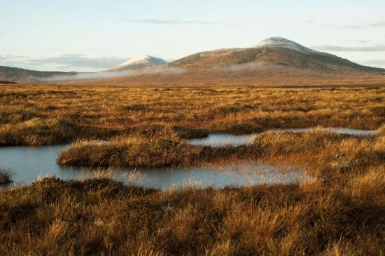 Photograph of The Flow Country - Peatland Partnership's World Heritage Site's Project Open Days