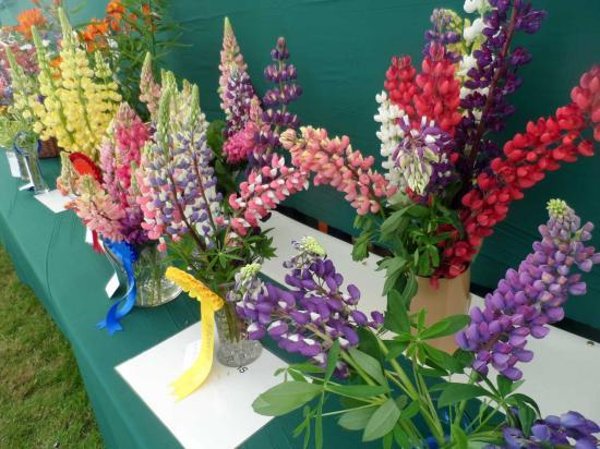 Photograph of Caithness County Show 2019 - Flower Tent