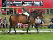 Thumbnail for article : Caithness County Show 2019 - Horse Winners Parade