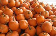 Thumbnail for article : Don't Waste Those Pumpkin Scoopings At Halloween